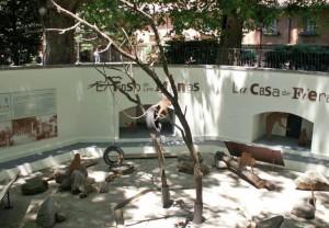 Monkey's home at the Casa de Fieras