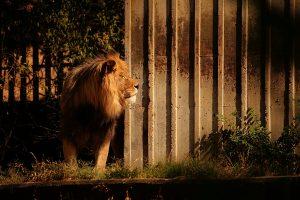 Madrid Zoo