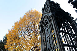 Aoyama Gakuin University (AGU)